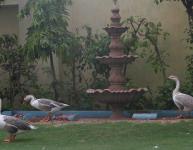 hotel-bharat-maha-palace11