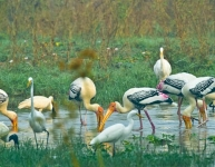 Keoladeo National Park Birds